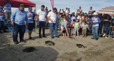 Reintegran ejemplares de tortuga marina a su hábitat natural en Sinaloa