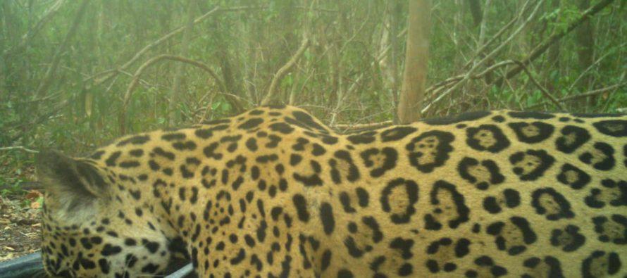 Monitoreo de bebederos en la Reserva de la Biósfera Calakmul