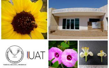 Científicos de la UAT, desarrollan un manual de la flora apícola de Tamaulipas que potenciará la apicultura