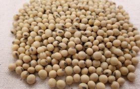 Disparan el primer esquema de bonos verdes para financiar la producción de soja y maíz sostenible