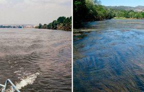 El tratamiento de las aguas provoca cambios en la flora y fauna de los ríos