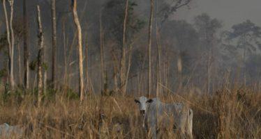 El millonario negocio de los incendios en la Amazonia