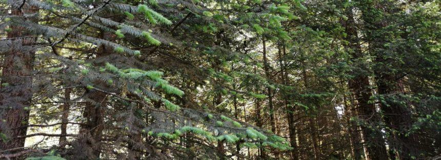 Durango cuenta con la Primera Certificación Forestal Internacional Grupal
