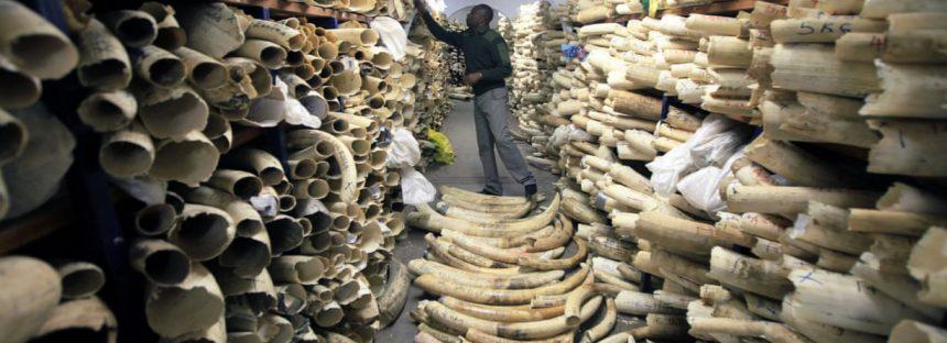 Cumbre de vida silvestre rechaza plan para permitir venta de gran arsenal de marfil