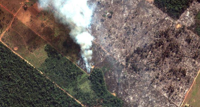 Incendios en Amazon: ¿qué está pasando y hay algo que podamos hacer?