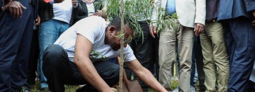 Etiopía rompe récord mundial al plantar más de 350 millones de árboles en un día