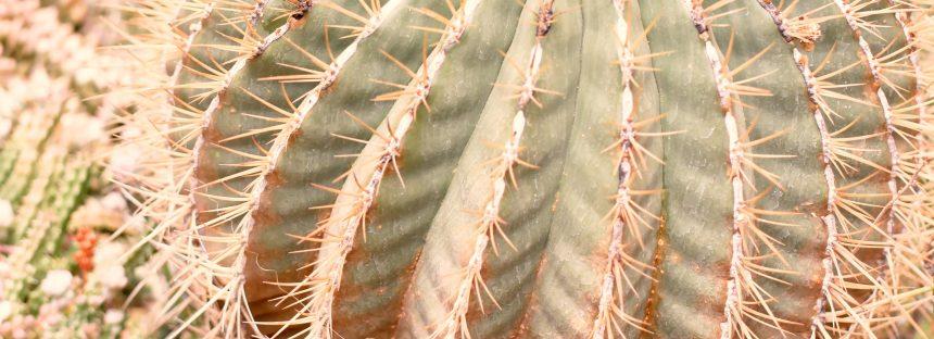 México Ambiental en el Invernadero Quinta Fernando Schmoll de Querétaro