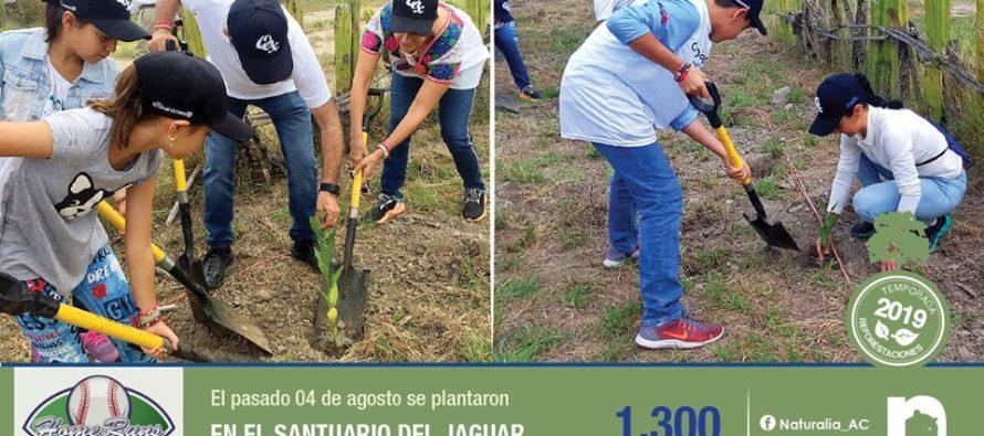 Naturalia y Citibanamex, y comunidad, plantan 1,300 árboles en Santuario del Jaguar EN Oaxaca