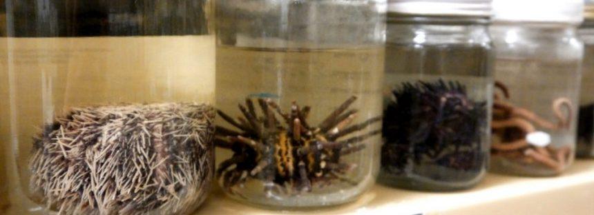 Para estudio científico, la Colección Zoológica de la UAA cuenta con 40 mil ejemplares