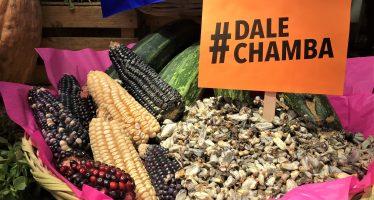 """Para preservar ingredientes de la comida mexicana, WWF activa su campaña """"Dale chamba"""""""