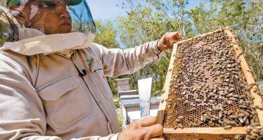 Sin castigo, exterminio masivo de abejas en comunidad maya