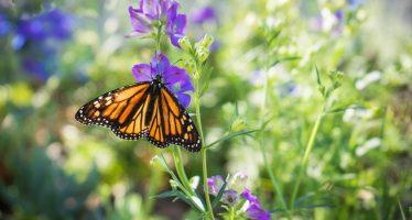 Capacitan a nueve comités de vigilancia ambiental de la Reserva de la Biosfera Mariposa Monarca