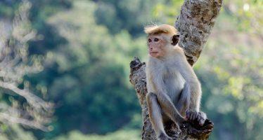 Los primates son los mamíferos terrestres más expuestos a los eventos climáticos extremos