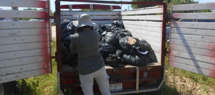Identifican a los responsables del tráfico de 46,700 huevos de tortuga