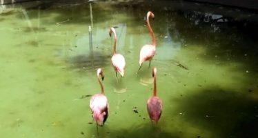 Realizan inspección en el Parque Zoológico La Pastora en Nuevo León