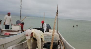 Inició la temporada de captura de pulpo en el Golfo de México y Mar Caribe mexicano el 1 de agosto
