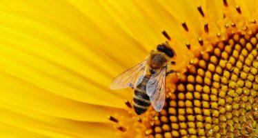 Profepa evade responsabilidad en exterminio de abejas en Yucatán