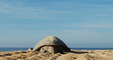 2a Reunión Internacional sobre Tortugas Marinas del Pacifico Oriental Tropical: reto de la conservación
