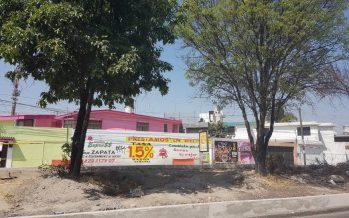 Realizan inventario de árboles en vialidades de Puebla