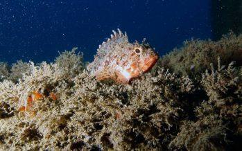 La vida marina vuelve al litoral de Barcelona
