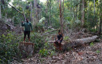 Brasil solo ha juzgado 14 de los 300 asesinatos de ecologistas de la última década