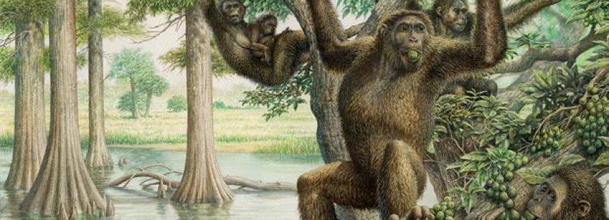 Una pelvis de hace 10 millones de años cuestiona cuándo y cómo nos pusimos de pie