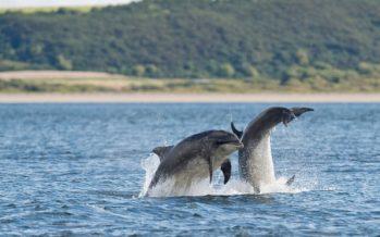 Los delfines llevan un 'cóctel tóxico' de productos químicos