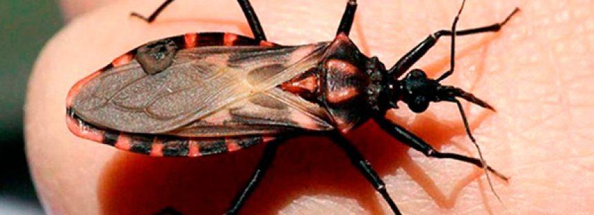 La enfermedad de Chagas, causante de insuficiencia renal