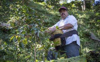 Empresas forestales comunitarias piden créditos para conservar y aprovechar recursos forestales