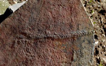 Este es el fósil de un animal que reptaba hace 550 millones de años