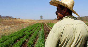 Impulsar el campo para reducir la pobreza en el país