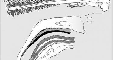 Los pterosaurios de hace 150 millones de años se alimentaban con el mismo sistema que los flamencos