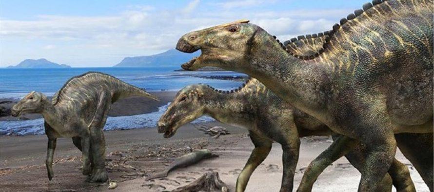 Descubren un nuevo hadrosaurio de Japón de hace 72 millones de años
