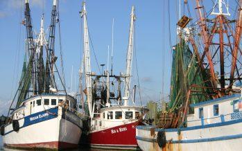 Pescadores aplican autoveda para la captura de camarón al sur de Sinaloa