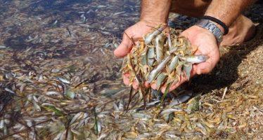 """SEO/BirdLife pide a """"todas"""" las administraciones una acción urgente para proteger y recuperar el Mar Menor"""