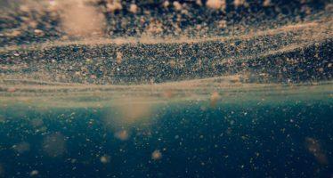 ¿Quién produce el oxígeno que respiramos? La respuesta flota en los océanos