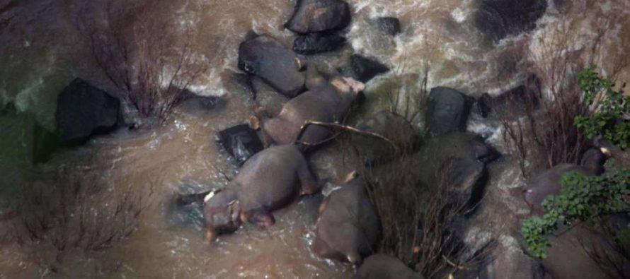 Seis elefantes mueren al caer por una cascada en un parque natural de Tailandia