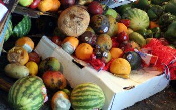 El mundo pierde el 14% de los alimentos desde la recogida hasta el minorista