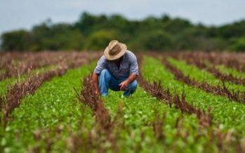 El sector agroalimentario es afectado por fallas estructurales