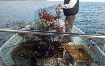 La Conapesca retiene precautoriamente más de 107 mil kilogramos de productos pesqueros y acuícolas ilegales