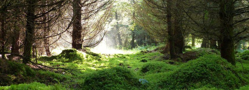 Una Estrategia Estatal para asegurar la Restauración Ecológica