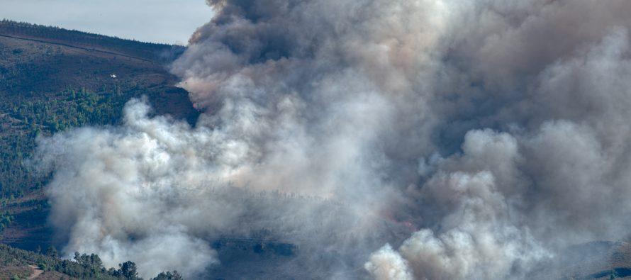 Así se debería actuar tras eventos masivos de mortalidad de árboles, como incendios y sequías