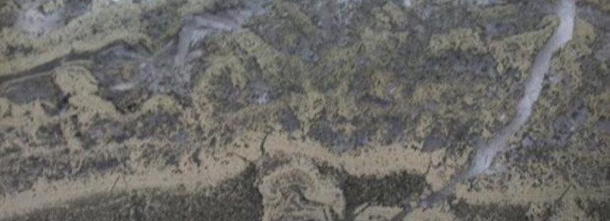 Hallan evidencias de vida de hace 3.500 millones de años en unas rocas de Australia