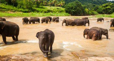 Mueren 55 elefantes por hambre y sed durante los últimos dos meses en la principal reserva de Zimbabue