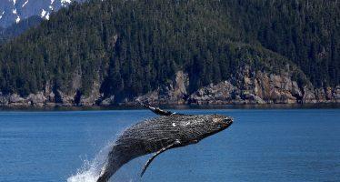 Hay que proteger a las ballenas para proteger al planeta