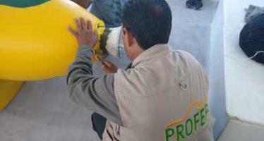 Continúa la colocación de boyas en la zona de refugio de la Vaquita Marina