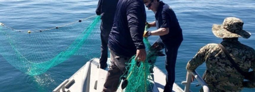 Aseguran redes totoaberas y de captura de camarón en recorridos marítimos en Baja California