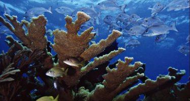 Cozumel protege y conserva sus arrecifes de coral para el futuro