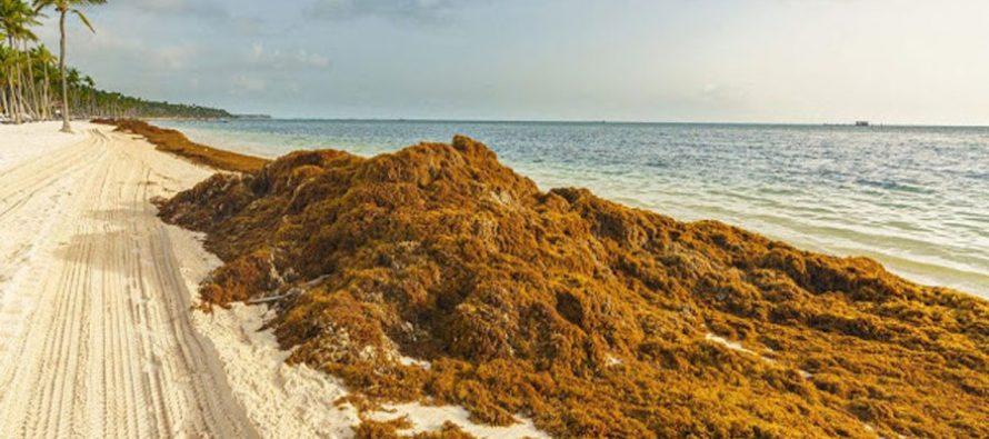 Francia y México, unidos frente al desafío del sargazo en el Caribe
