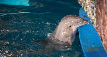 La muerte de un delfín devuelve la polémica al zoo